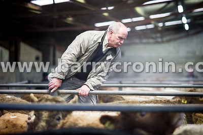 27th October, 2015.John Corden from Ballyjamesduff checking out the animals pictured at Ballyjamesduff Mart, County Cavan. Ph...