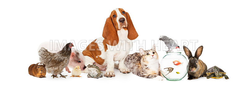 Group of Pets Together Over White