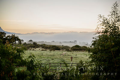 A pair of horses grazing in a field, trees just visible through early morning mist lying in a valley surrounded by mountains ...