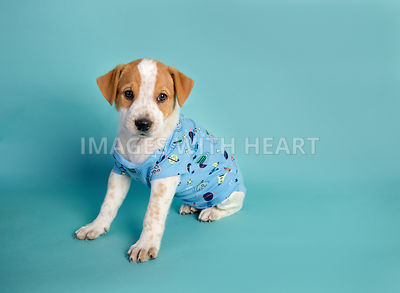 male puppy in blue patterned onesie on turquoise paper