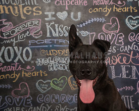 black dog in front of chalkboard