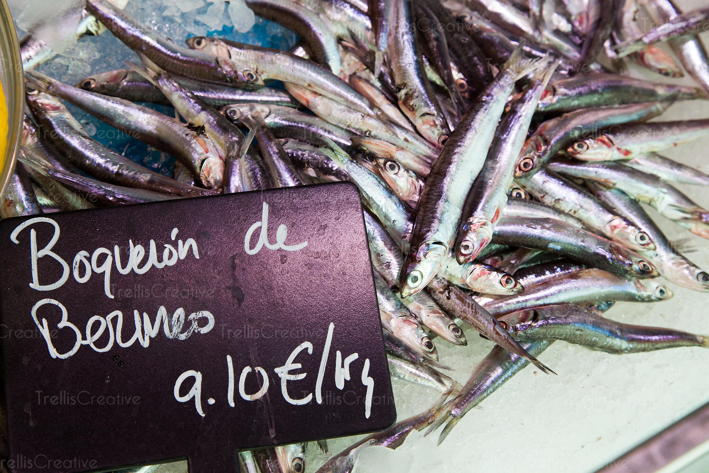 Freshly caught anchovy in Spain