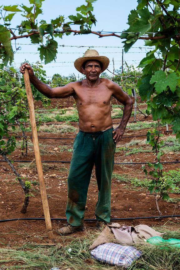 Portrait of a Grape Farmer