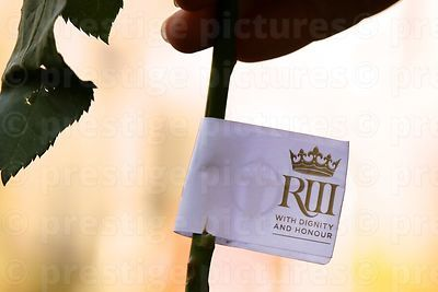 White Rose Stem with an RIII Label Attached