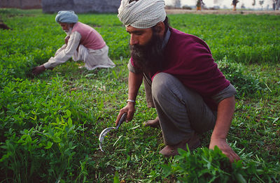 Sikh farmer in the Punjab, India