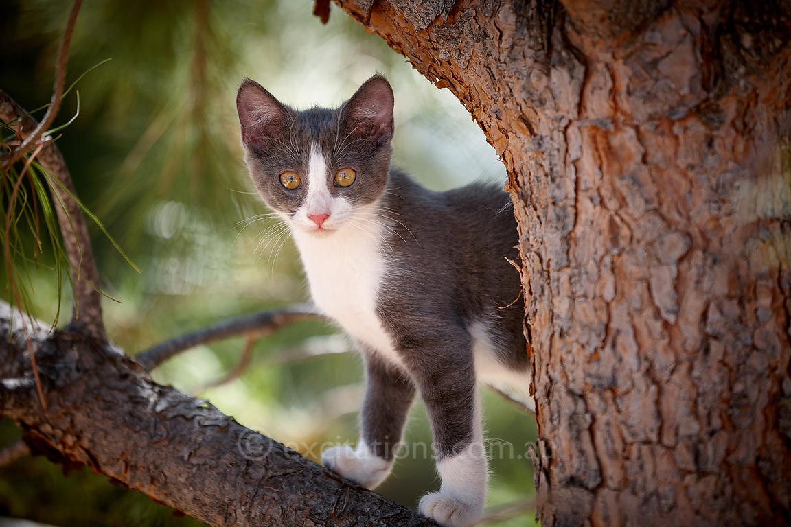 Kitten up tree.