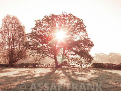 Sun brust through a tree, New Forest, Hampshire, UK