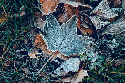 Icy_leaves_23112016