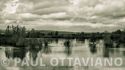 Sauvie Island Landscape 3 | Paul Ottaviano Photography