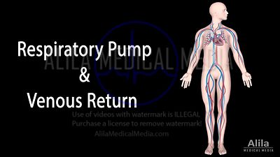 Respiratory pump and Venous return NARRATED animation