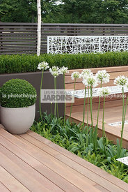 Pot design : Buxus sempervirens (buis), Common box, Agapanthus umbellatus 'Albus', terrasse contemporaine. Conception : OneAb...