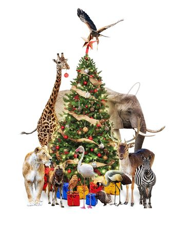 zoo Animals Decorating Christmas Tree