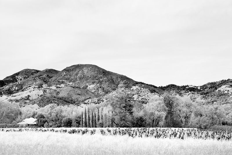 NAPA VALLEY BLACK AND WHITE