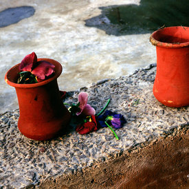 Flower pots and petals in the Garden of the Five Senses