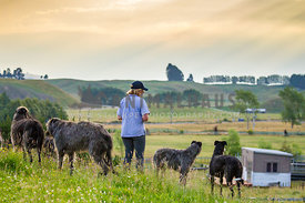 lady looks out over farm with her 4 dogs