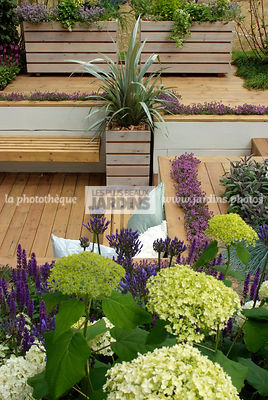 Aromatic plant, Border, Border with flowers, Container, garden designer, Perennial, Terrace, Thyme, Window box, Contemporary Terrace, Wooden Terrace, Digital, Silver spear
