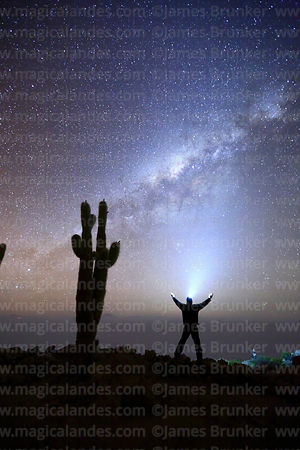 Tourist wearing headtorch standing next to Echinopsis atacamensis (pasacana subspecies) cactus looking at Milky Way, Incahuas...