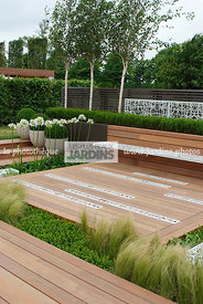Buxus, Contemporary garden, Common Box, Wooden Terrace, Digital, Formal garden, Grasses, Scenery