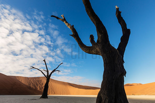 Dead Camelthorn Trees in Dead Vlei