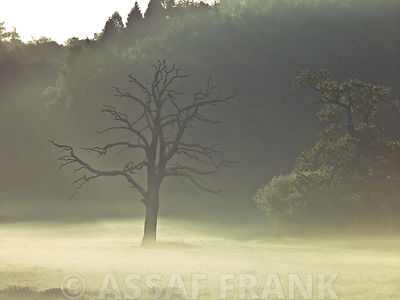 Tree in a field at sunrise