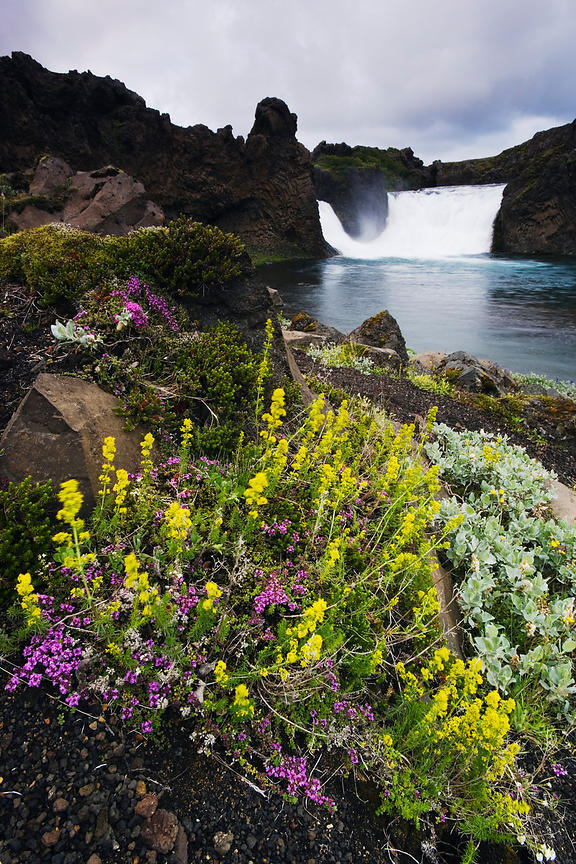 Waterfall and wildflowers, Iceland
