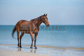 horse walking along the beach
