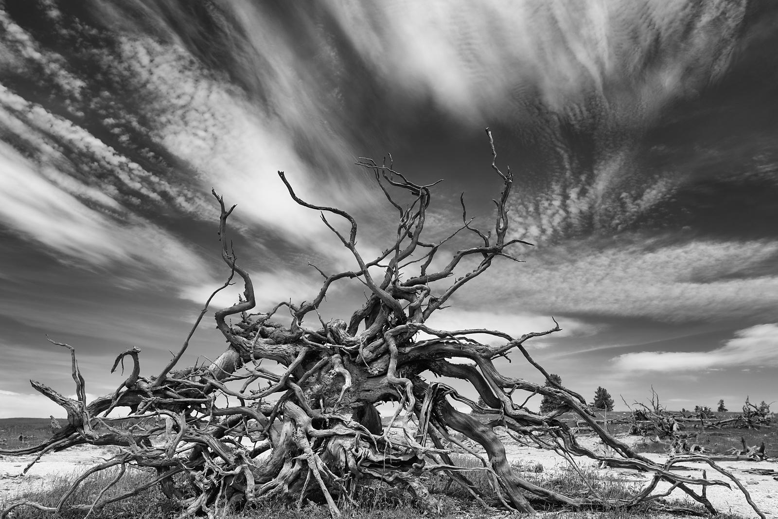 Yellowstone-River-Group-Tree-Roots-BW-1795
