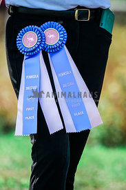 rider wearing two blue ribbons