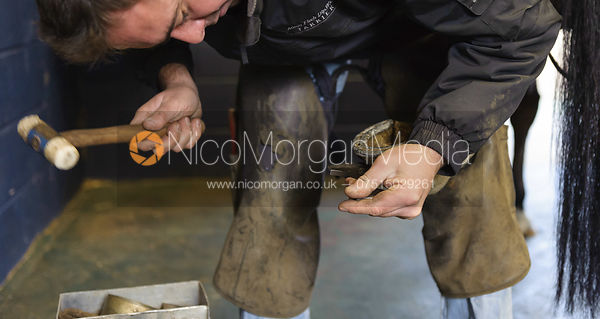 Farrier at work work with hammer and hoof
