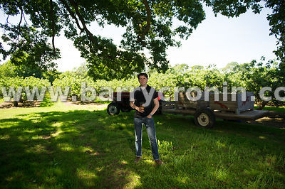 June 18th, 2014 - Cider maker Greg MacNeice of MacIvors Cider Company photographed at the company orchards near Moy, County A...