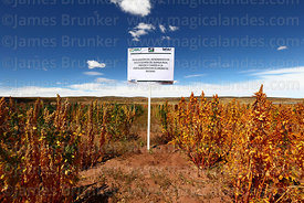 Field for evaluating effects of potassium chloride fertilisers on yields of quinoa real plants (Chenopodium quinoa), Bolivia