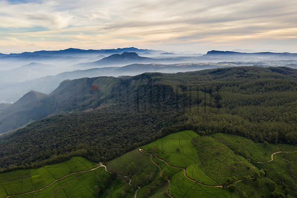 Aerial View of Tea Fields and Nearby Hills at the Heritance Tea Factory