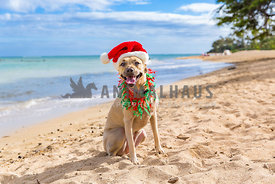 Cute Christmas dog at the beach