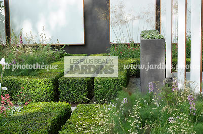 Buxus, Contemporary garden, Digital, Hedge, Low hedge, Common Box