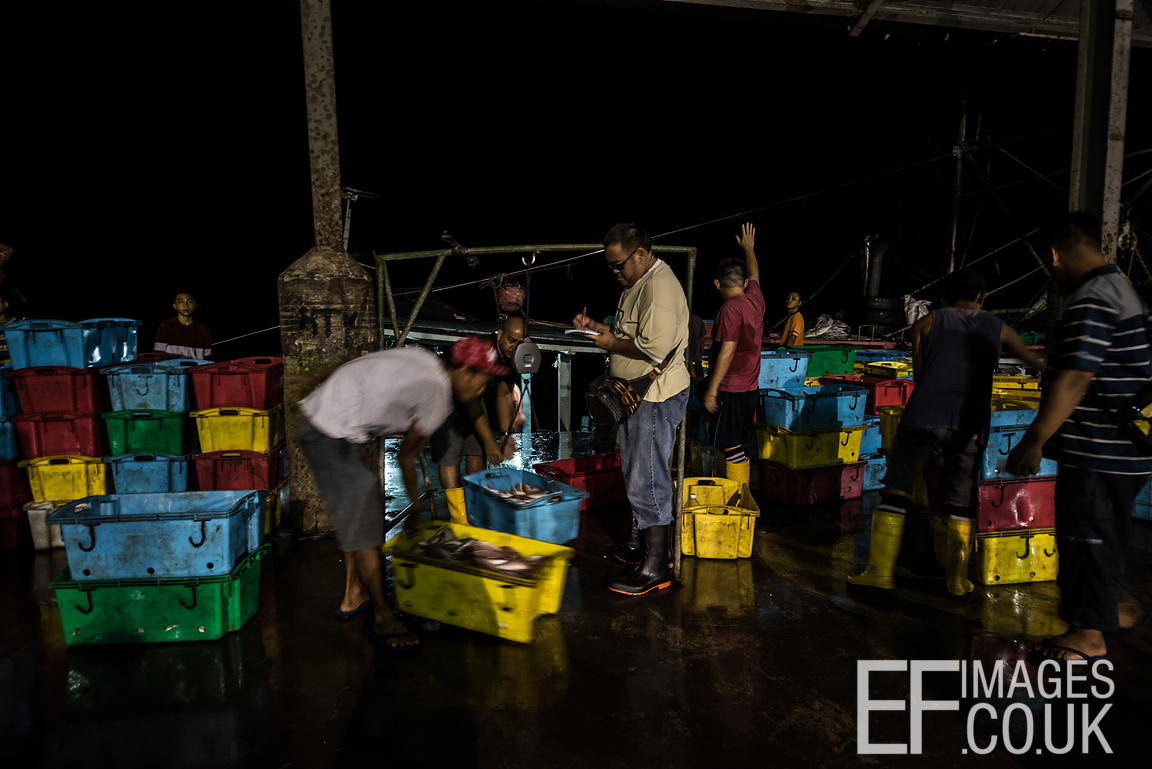 EF IMAGES   Fish market workers sorting the day's catch for buyers