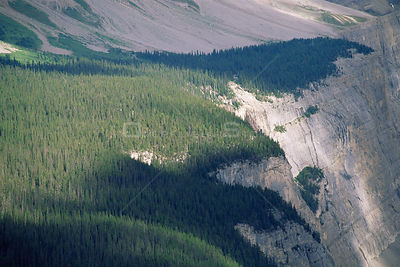 Aerial view of coniferous tree Line, Banff NP, Alberta, Canada