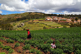 Quechua woman wearing traditional dress in potato field, village and terraces of Inca site in background, Chinchero, near Cus...