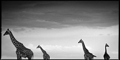 7421-Four_giraffes_in_the_sky_Kenya_2006_Laurent_Baheux