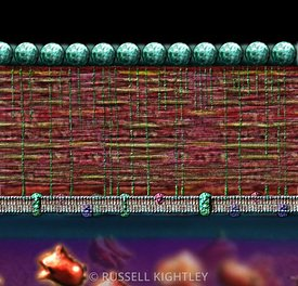 Bacterial Gram positive cell wall