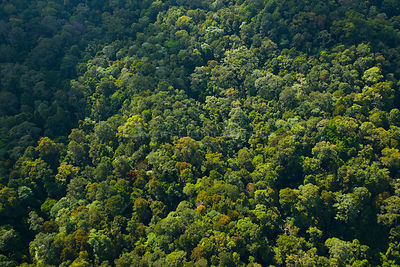 Aerial view of lowland rainforest, Sabah, Borneo, Malaysia. 2007