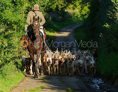 Andrew Osborne MFH leads Hound exercise for the Cottesmore Hounds, July 2017