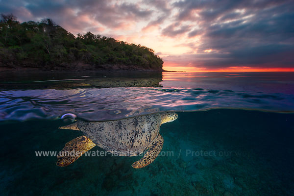Over the surface - Sea Turtle