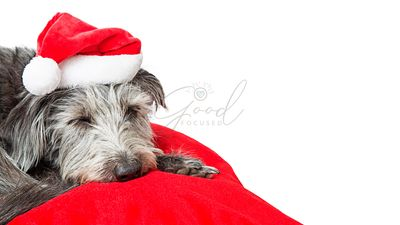 Cute Sleeping Christmas Dog Copy Space