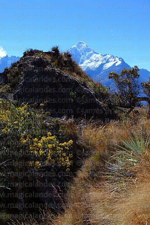Mt Veronica and cloud forest vegetation, near Ollantaytambo, Sacred Valley, Peru