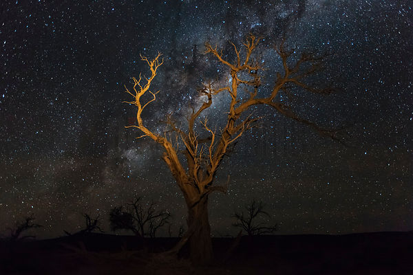 Cottonwood Tree and Milky Way
