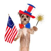 Fourth of July Celebration Dog