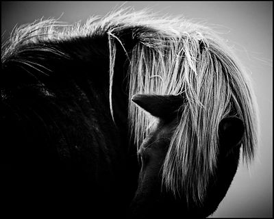 Never look back, Wild horse of Iceland 2015 © Laurent Baheux