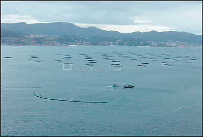 SPAIN River Arousa -- 15/12/2002 -- Fishing trawler cleans the small amounts of oil from the Prestige which have entered the ...