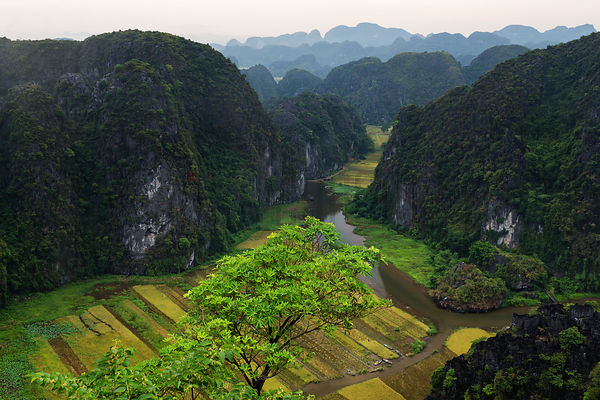 Elevated View of Limestone Hills and Rice Paddies from Ton Coc Viewpoint