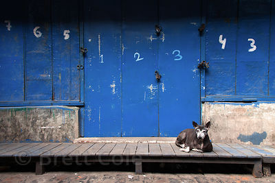 A stray dog sleeps in front of lockers at Newmarket, Kolkata, India.